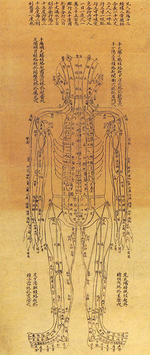 tan-acupunctuur-lichaamsschema